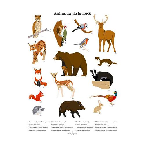 Poster les animaux de la forêt